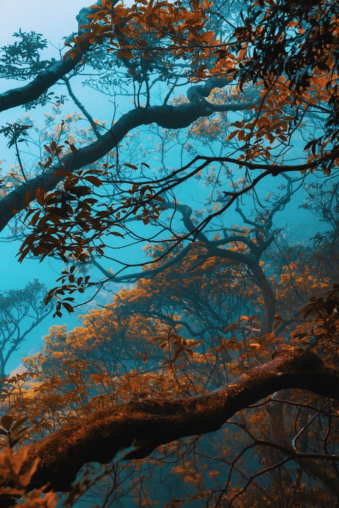 Misty Peak by Win Mag