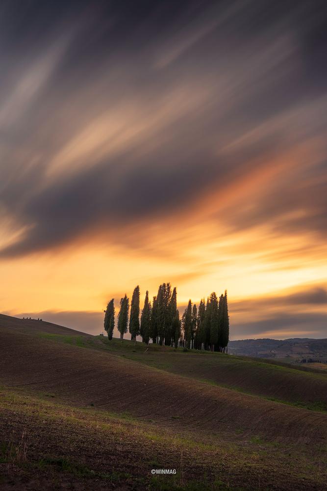 Tuscany Grove by Win Mag