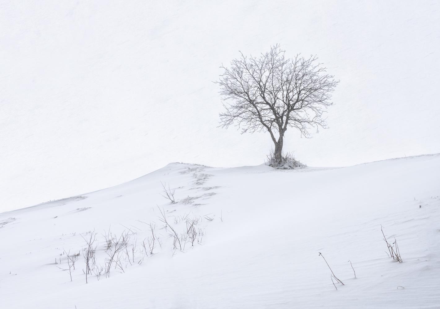 Tree on a snowy hill by Patrick Snitjer