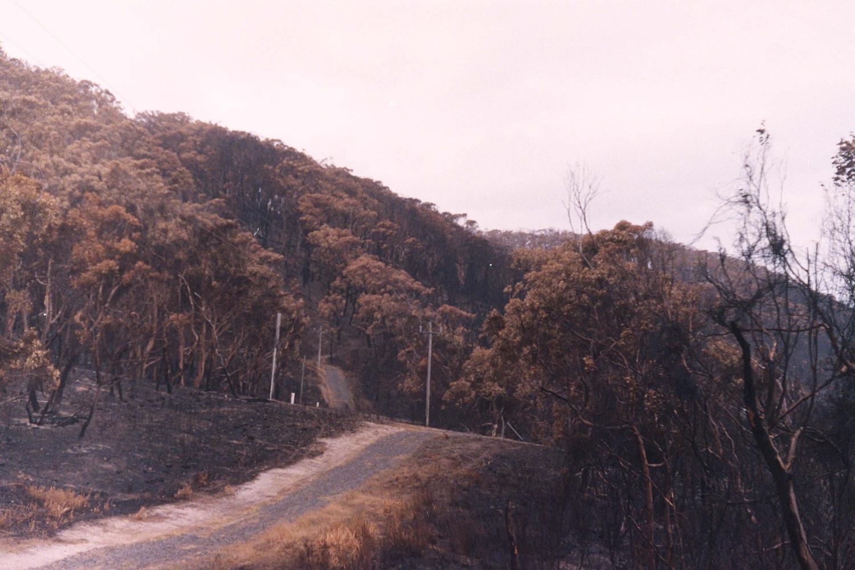 Post bushfires by sean meaney