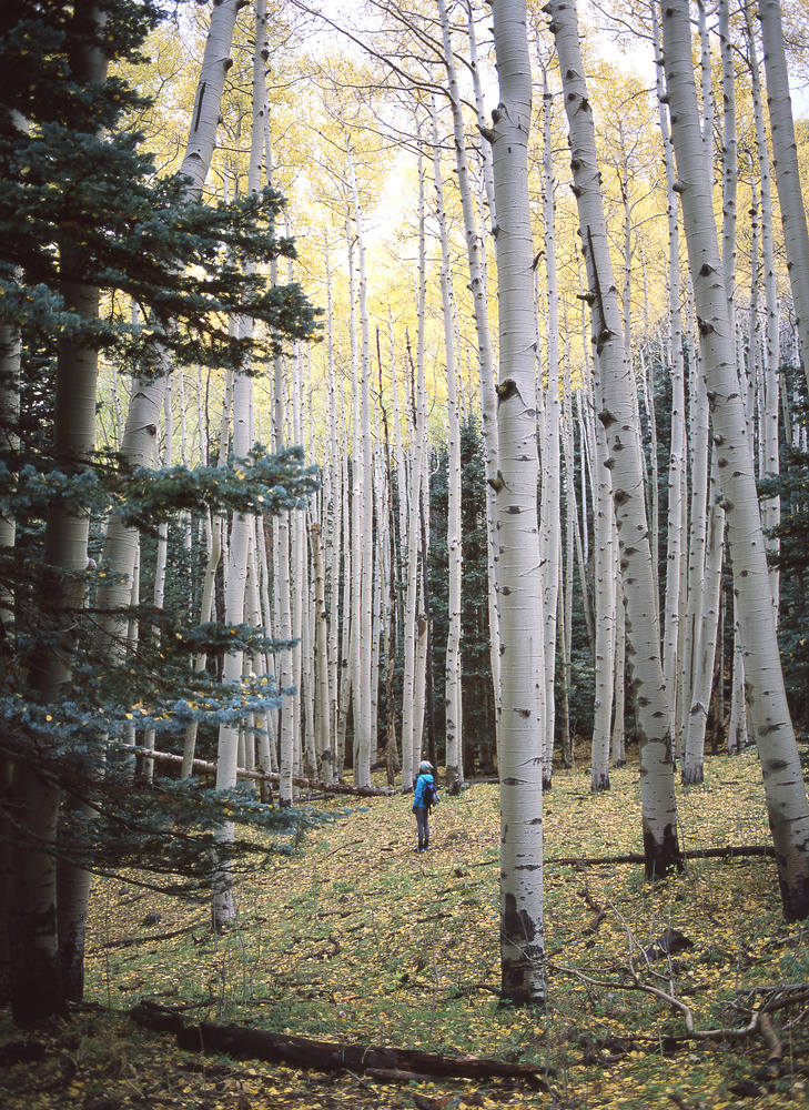 Flagstaff in Autumn - Provia by James Madison