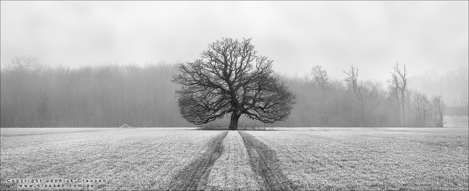 Tree Of Life by Jannick Clausen