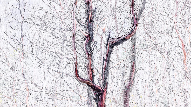 BloodGum by Jannick Clausen