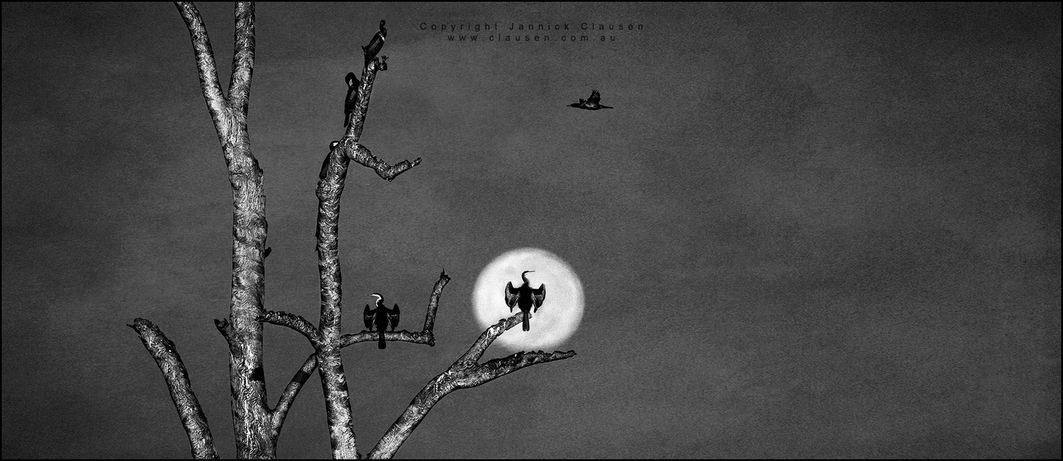 BatBird by Jannick Clausen