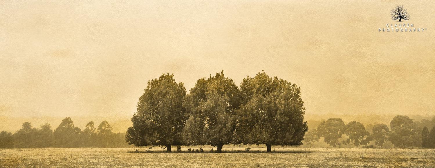 Misty Three's  by Jannick Clausen
