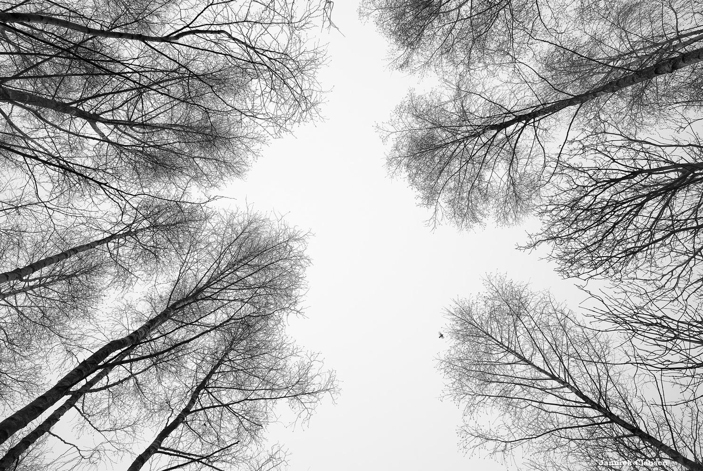 Morning Mist II by Jannick Clausen