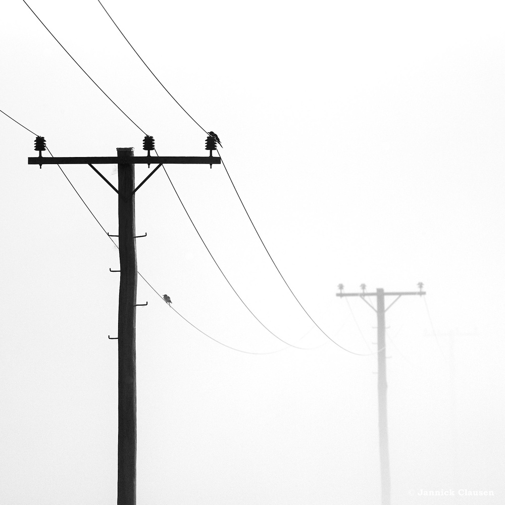 Misty Morning I by Jannick Clausen