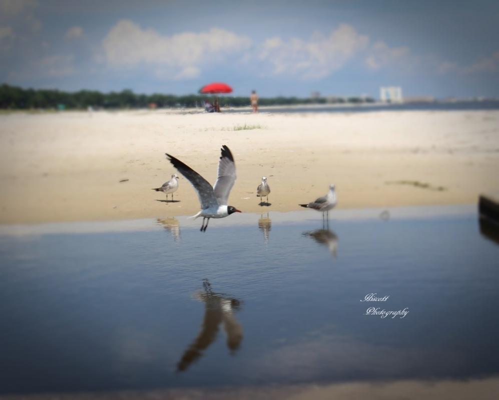 Seagulls by Elizabeth Hiscott
