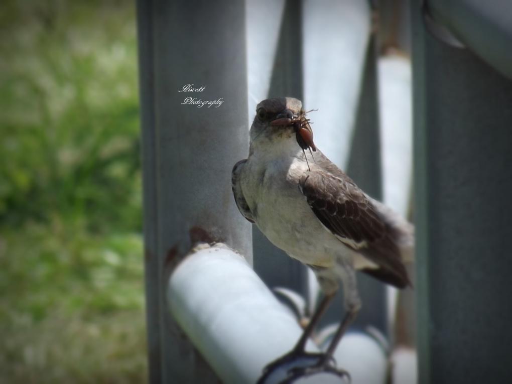 Mama Bird by Elizabeth Hiscott