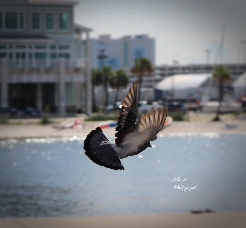 Beach Bird by Elizabeth Hiscott