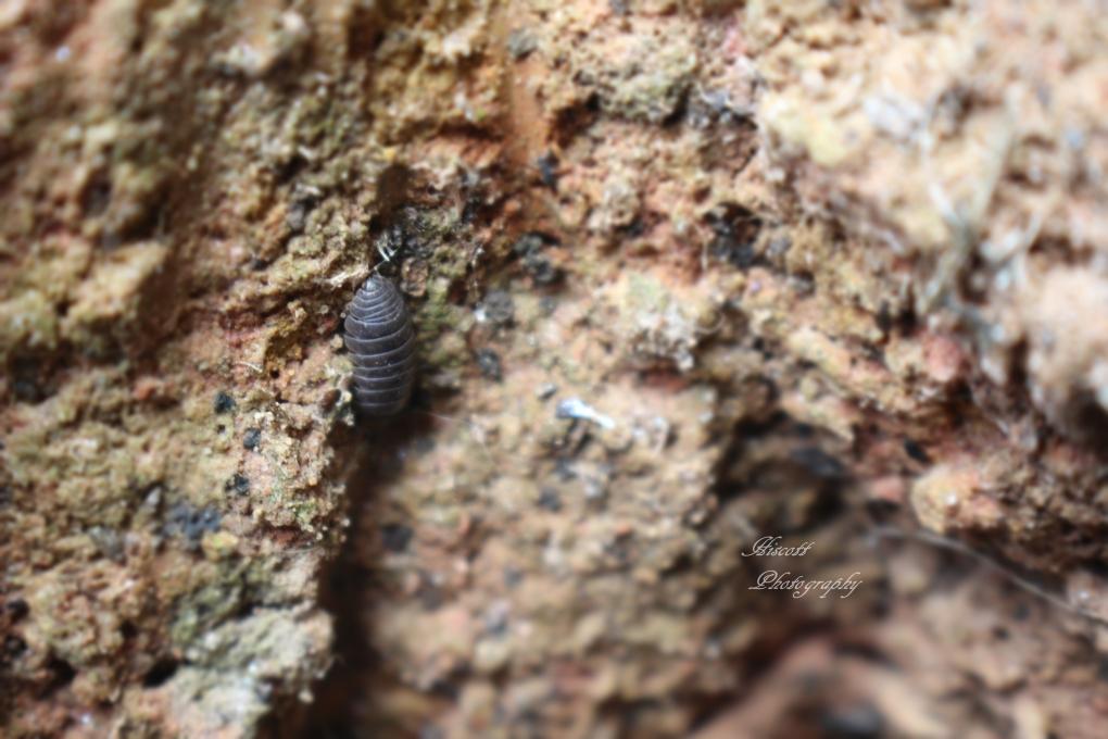 Micro Bug by Elizabeth Hiscott