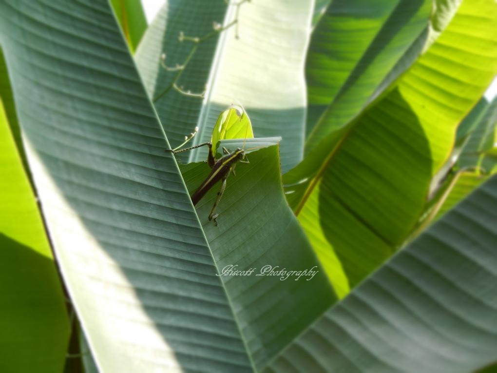 Big Bug by Elizabeth Hiscott