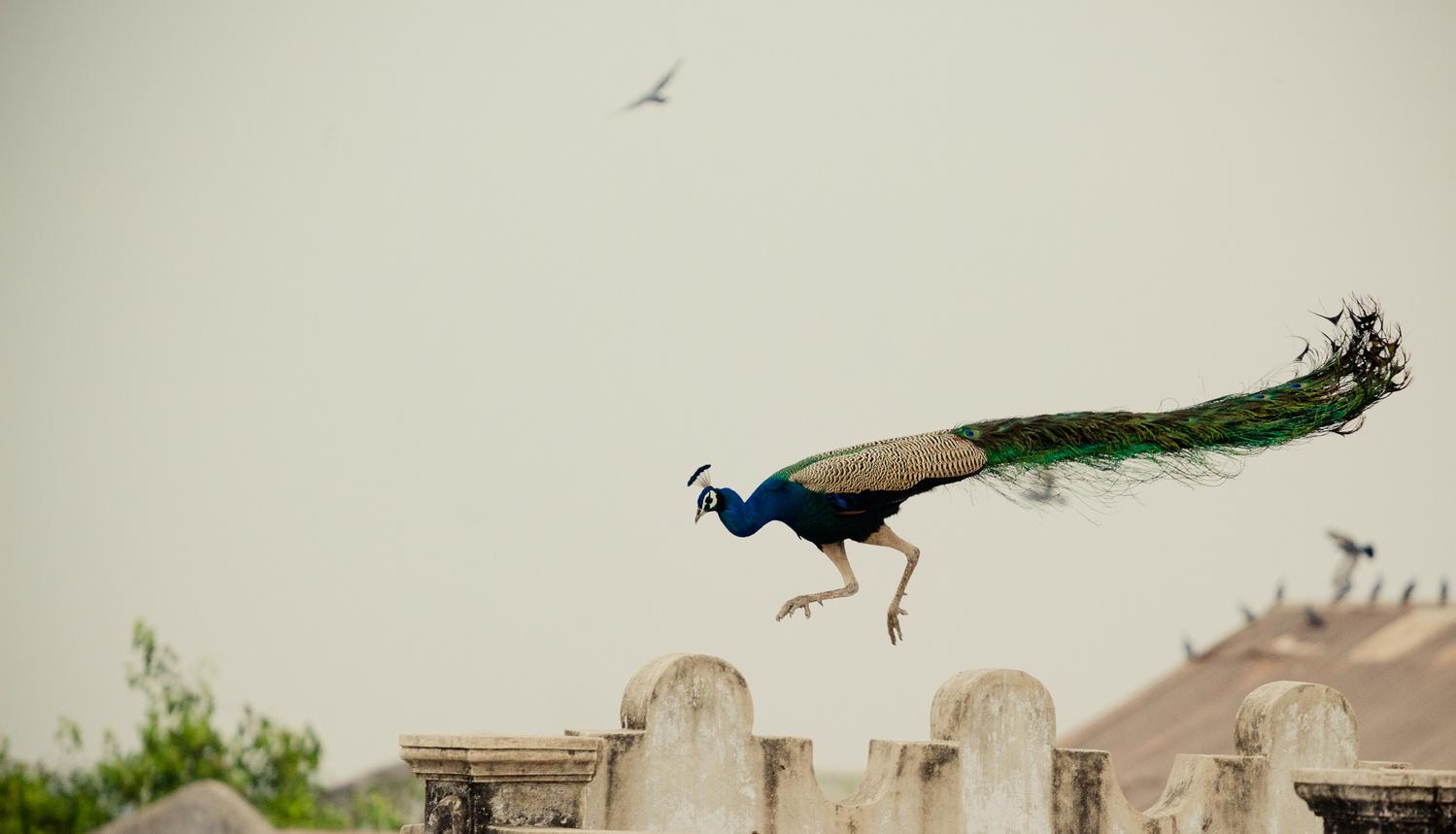 Jumping by Vivek Doshi