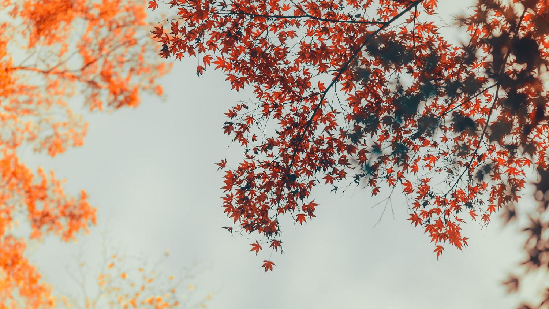 「赤黄緑」 by tommy conlin