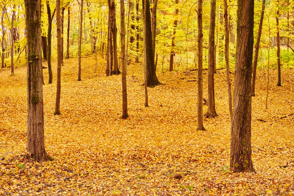 Fall Forrest by Nathan Westcott