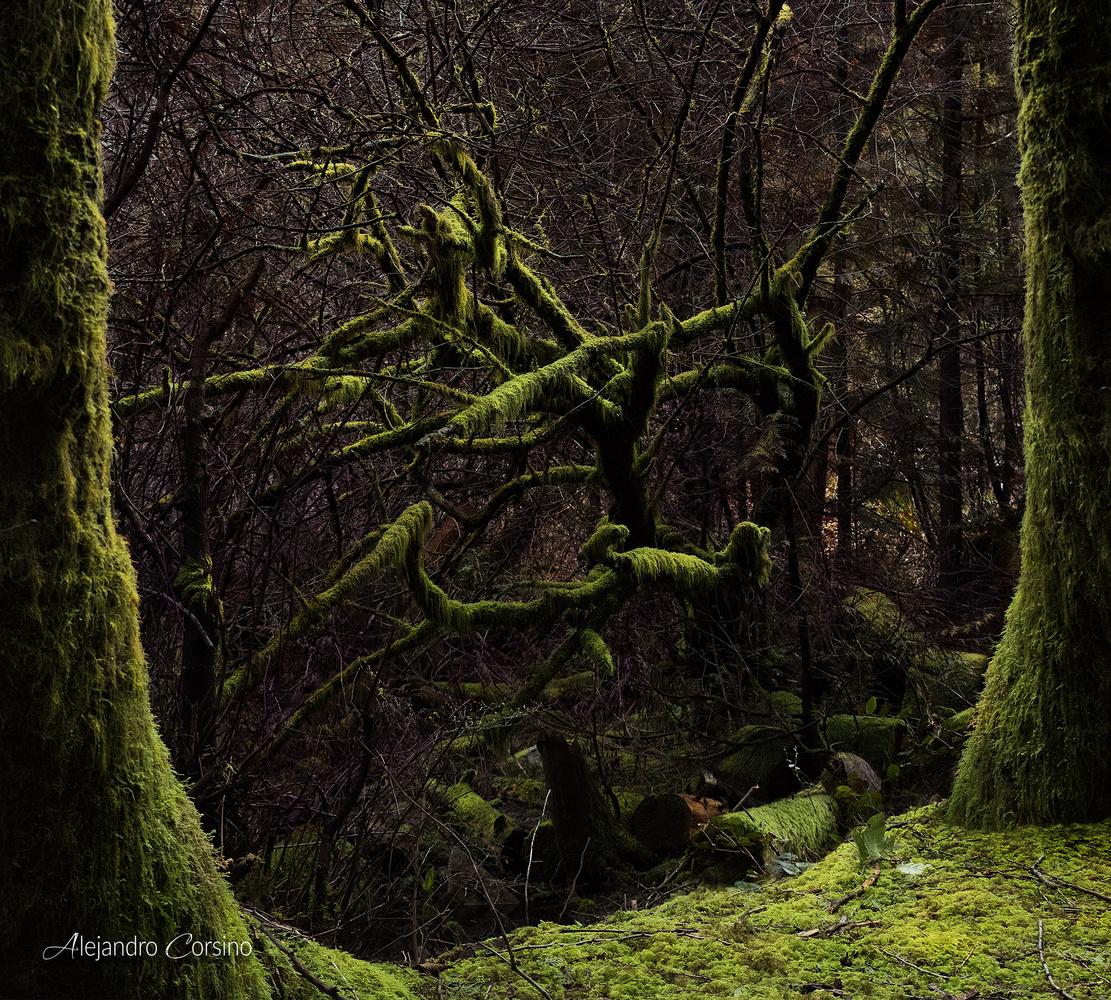 Radioactive moss by Alejandro Corsino