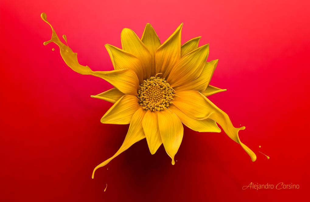 Melting flower by Alejandro Corsino