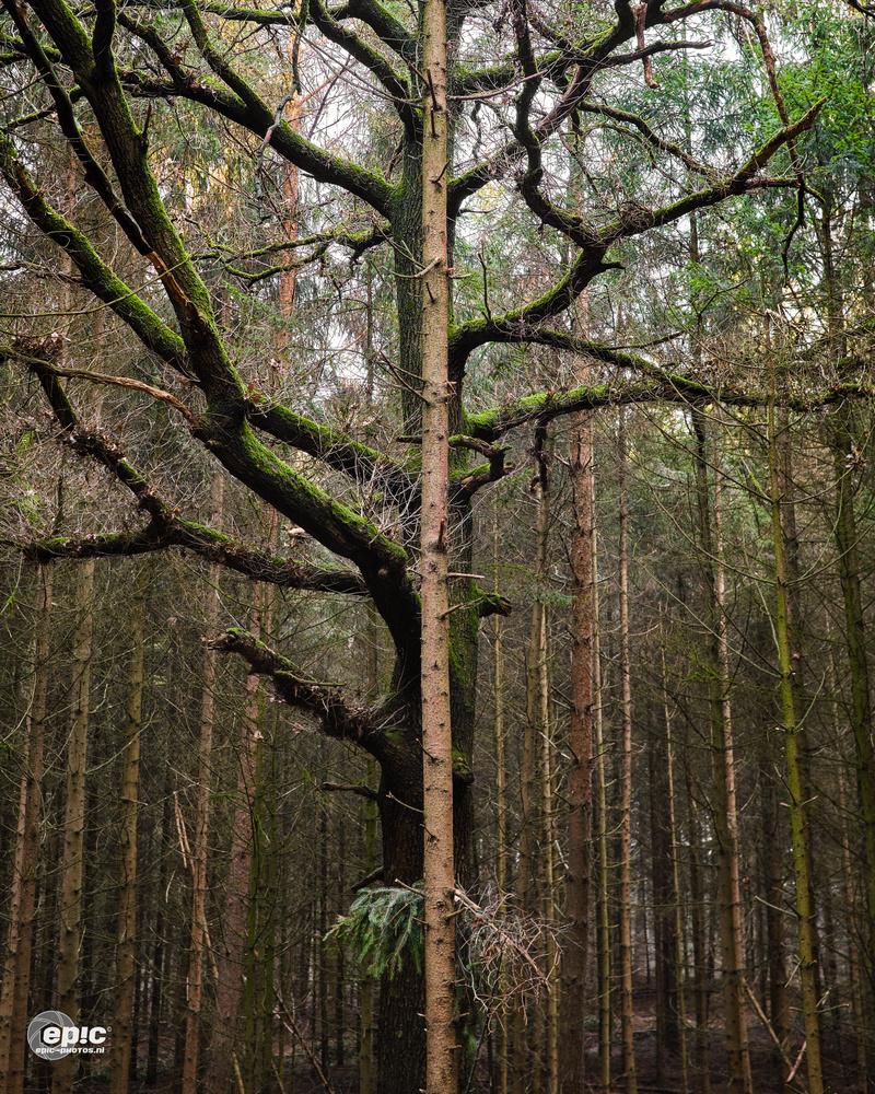 Pine & Moss by Erick Van Rijswick