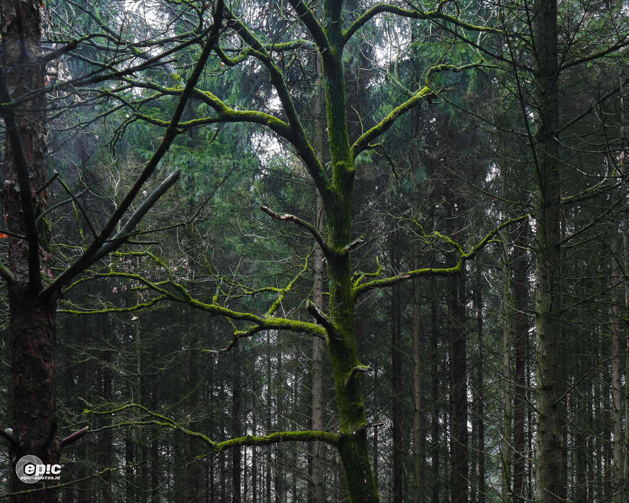 Mossy Tree by Erick Van Rijswick