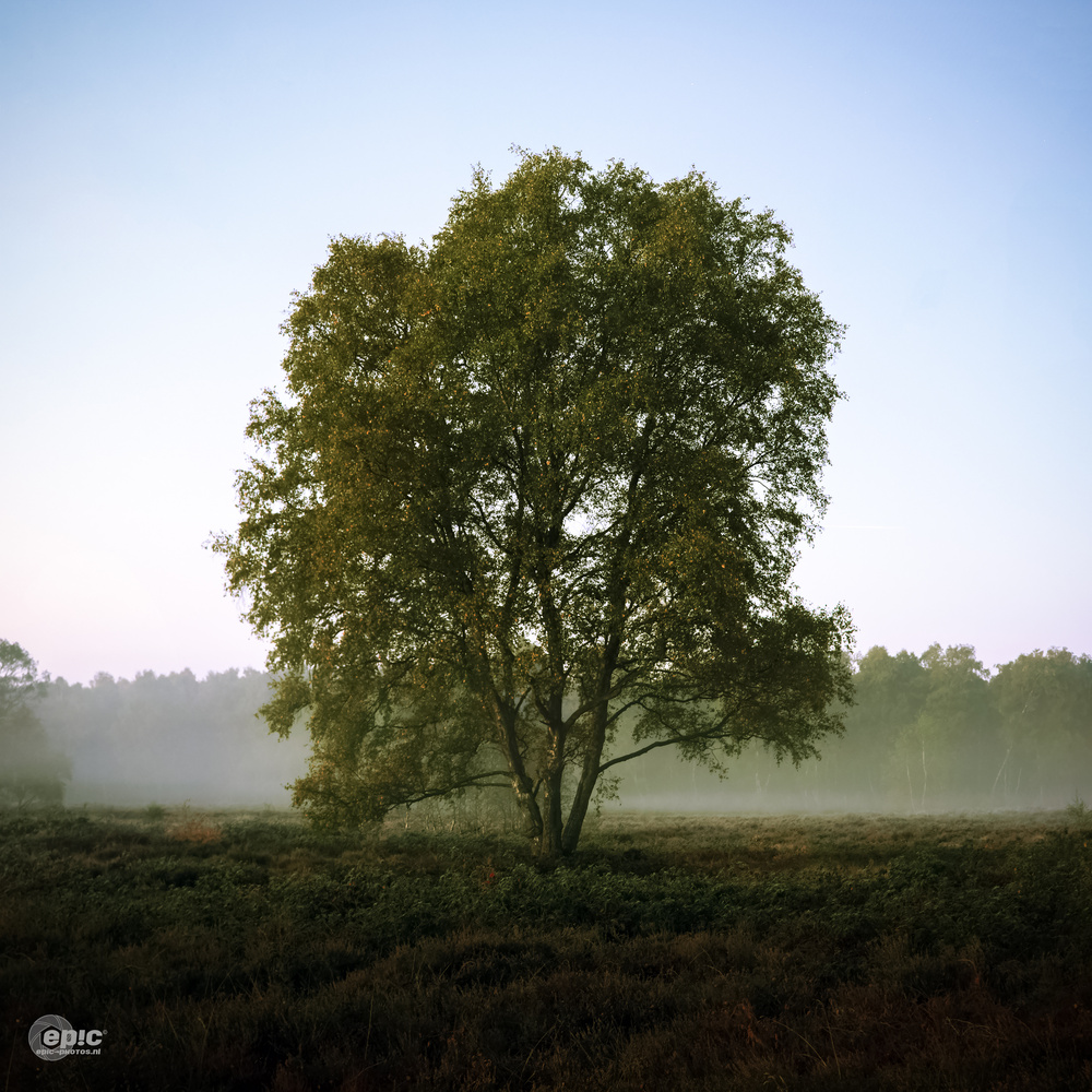 Foggy Tree by Erick Van Rijswick