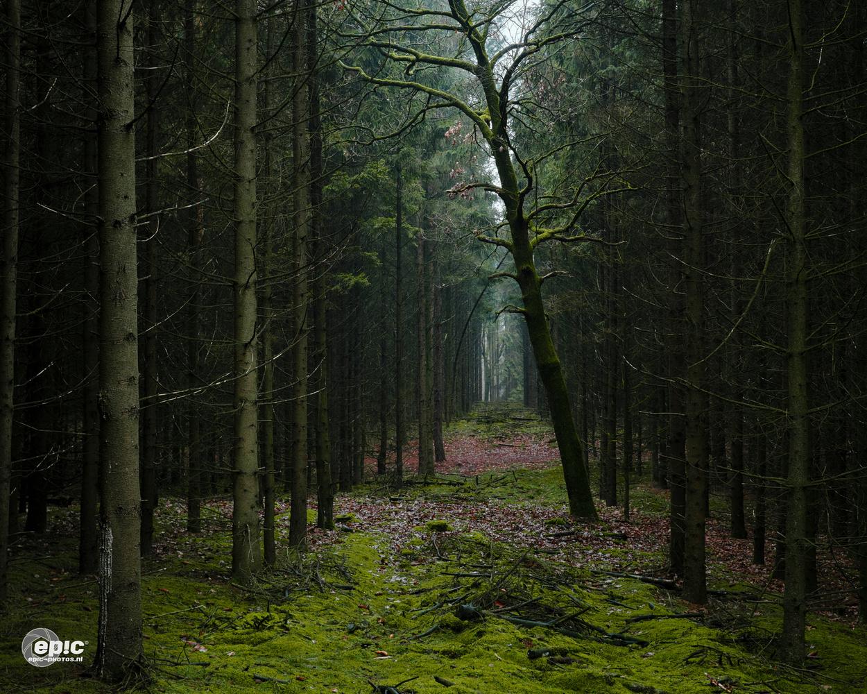 Wood Mood by Erick Van Rijswick