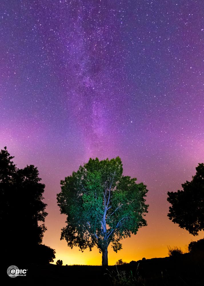Milkyway Tree by Erick Van Rijswick