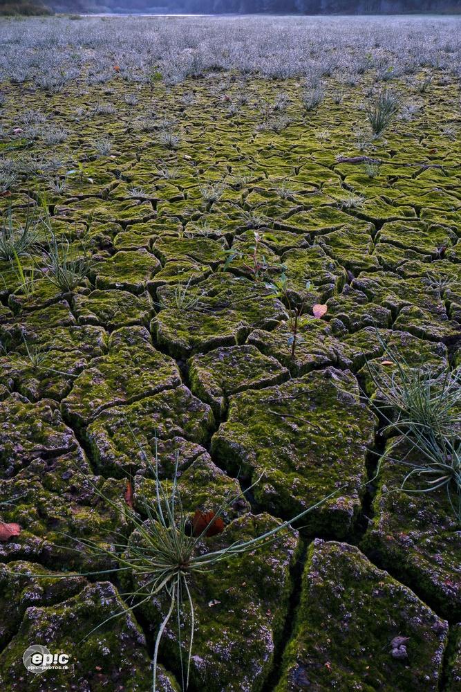 Dry Summer by Erick Van Rijswick
