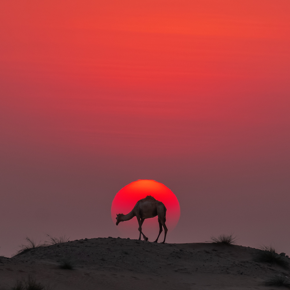 Into the Sun by Babar Swaleheen