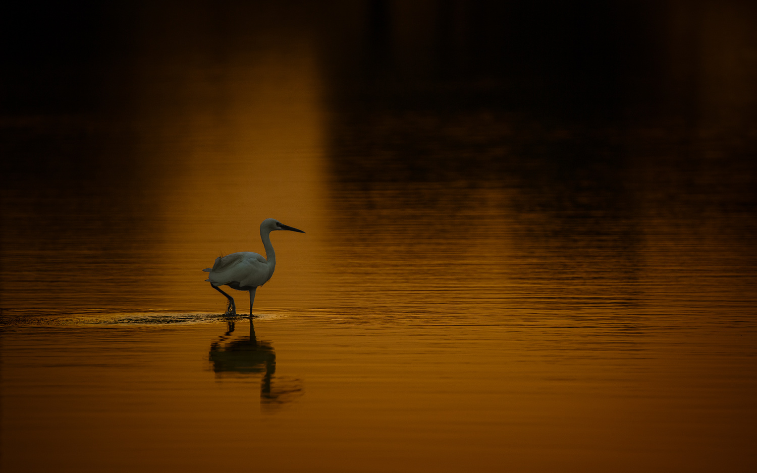 Only & Lonely by Babar Swaleheen