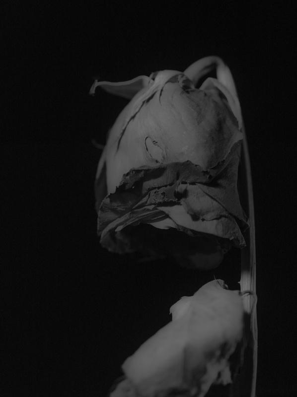 Death by Adam Griffin