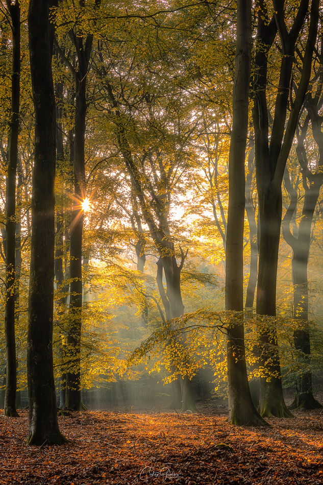 Silence of the forest by Costas Ganasos