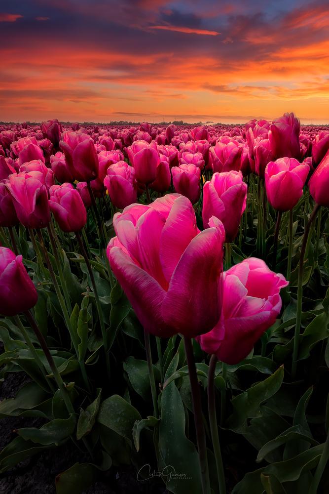 Spring is coming by Costas Ganasos