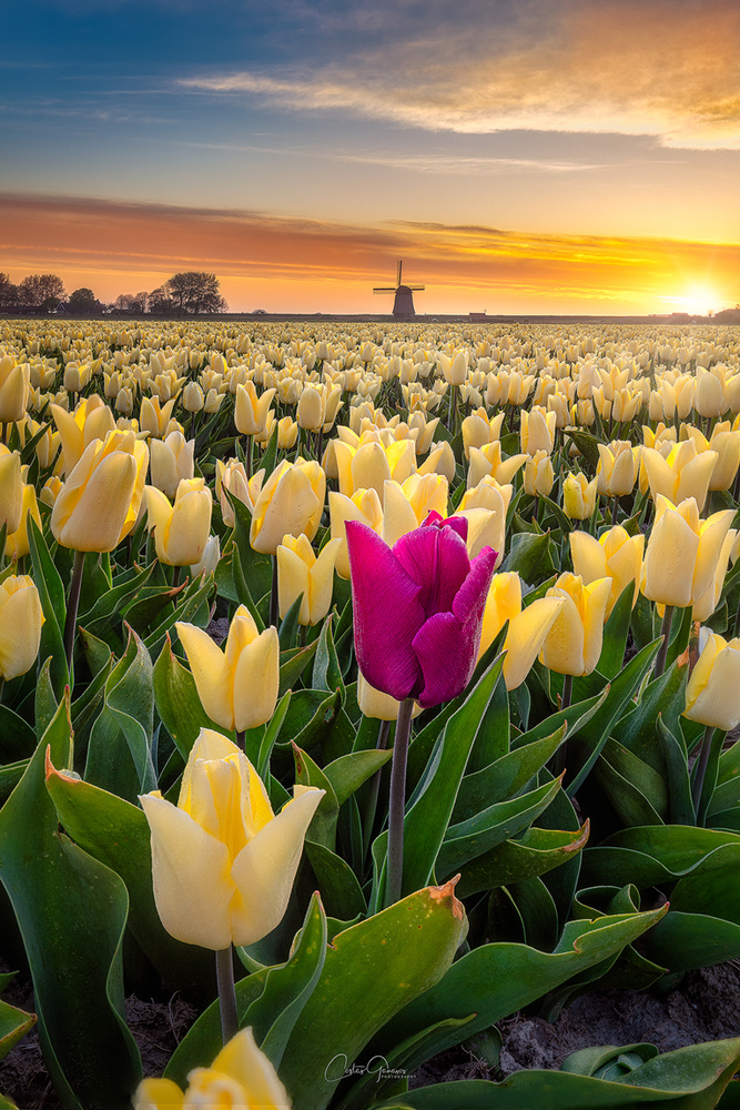 Stand out from the crowd by Costas Ganasos