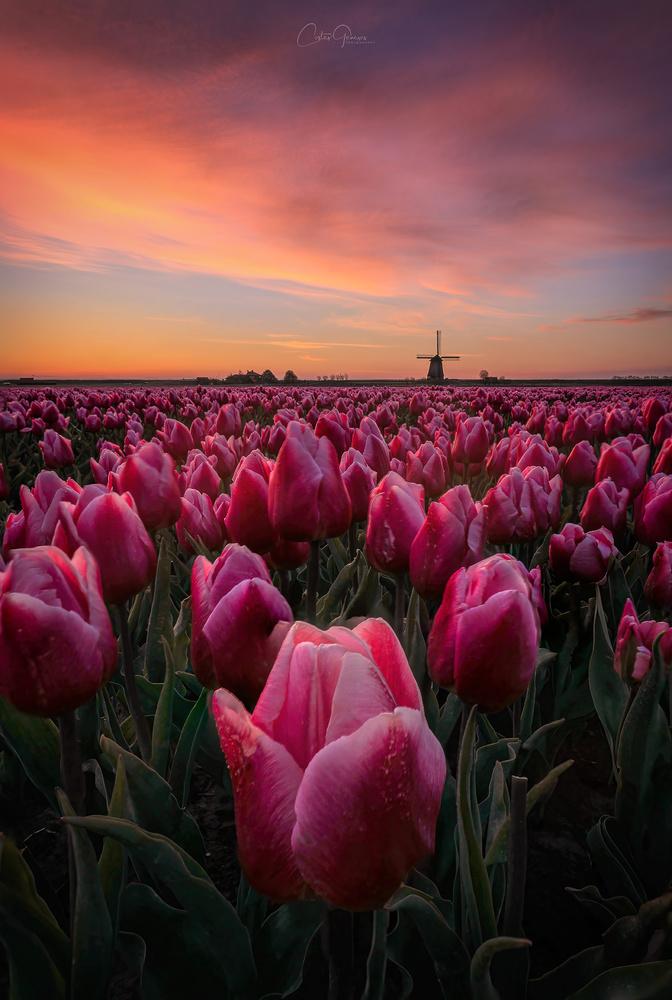 Springtime sunrise in the Netherlands by Costas Ganasos