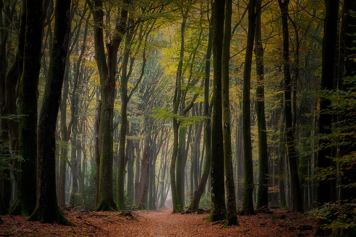 Narrow path down the forest by Costas Ganasos