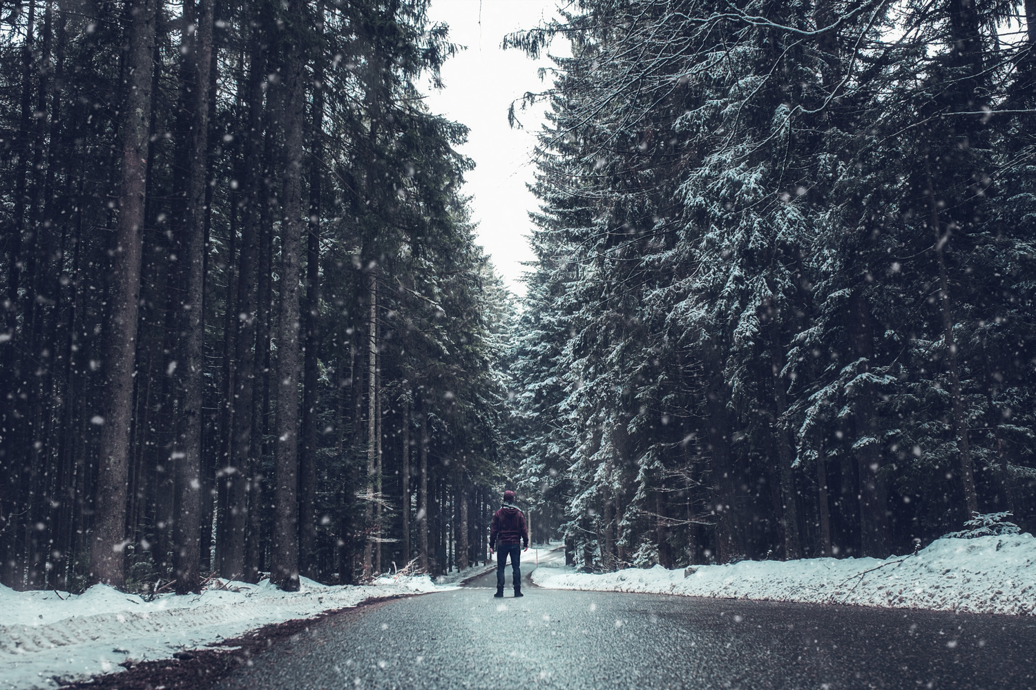 Exploring Germany's black forest. by Matthias Dengler