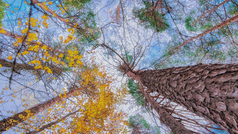Two Seasons by Carl Irjala