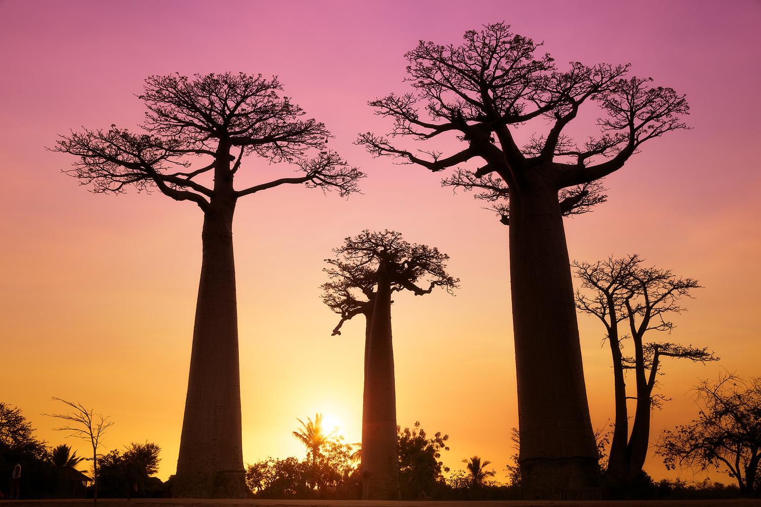 Avenue of Baobabs by Kieran Stone