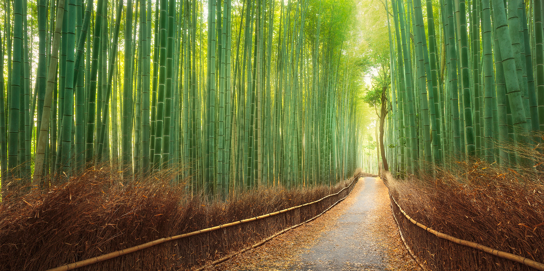Kyoto Path by Kieran Stone