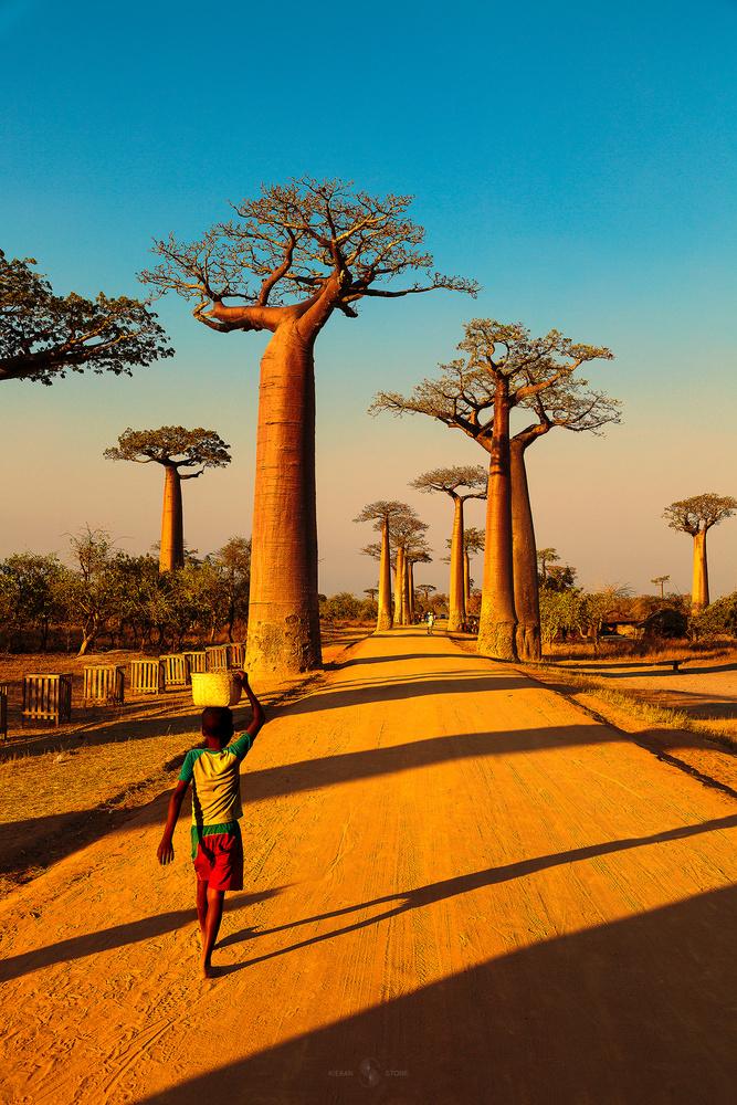 Avenue of Baobabs by Kieran Stone