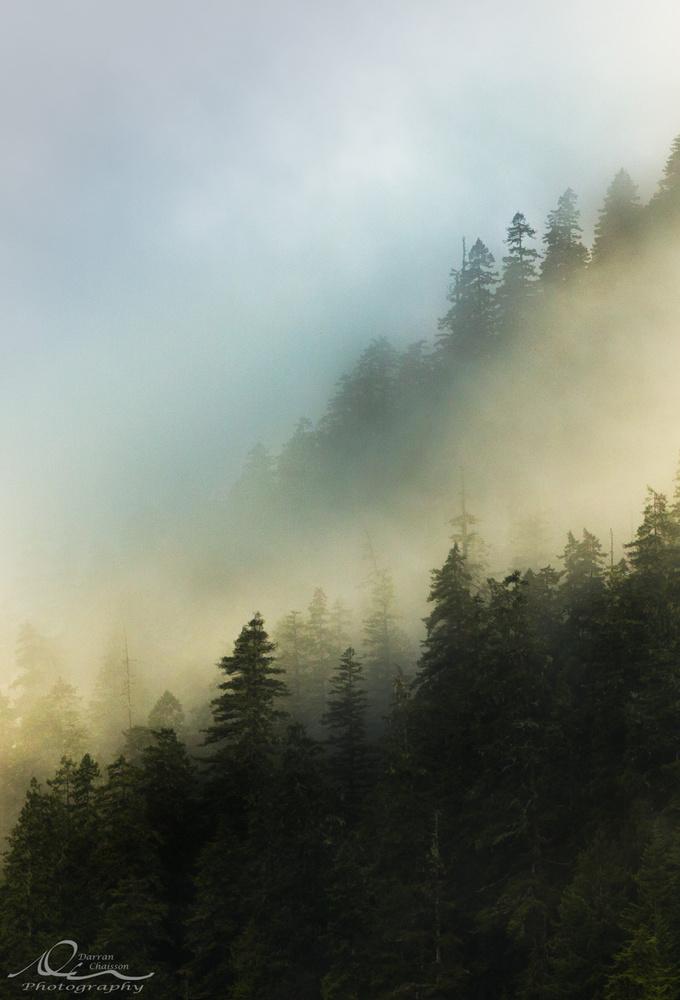 Sutton Mist by Darran Chaisson