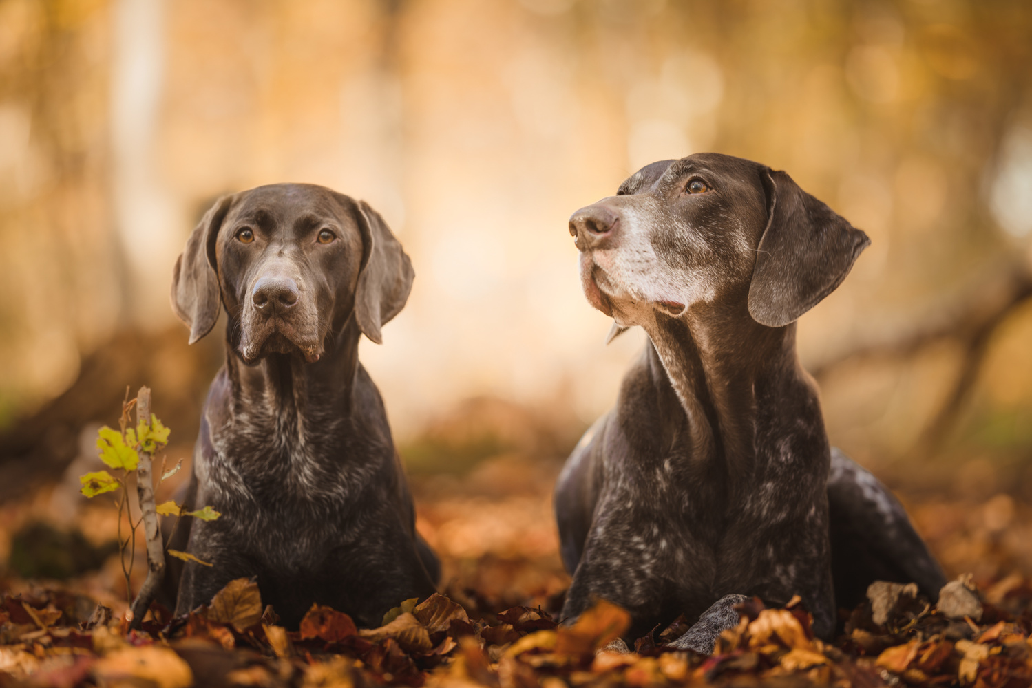 Autumnal walk by Phil Wright