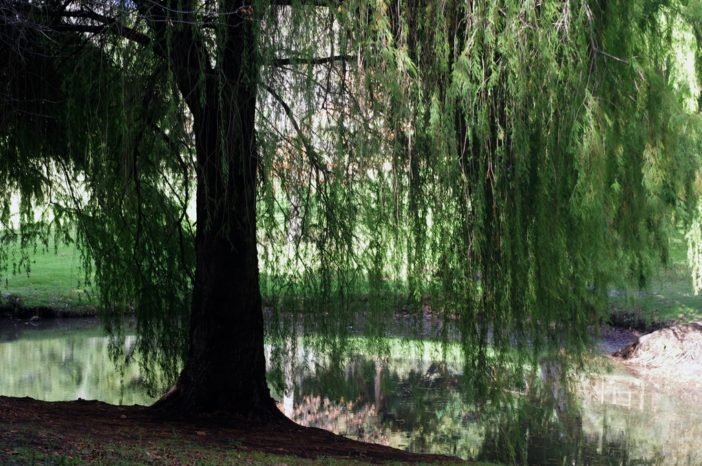 Weeping in the Park by in Pics