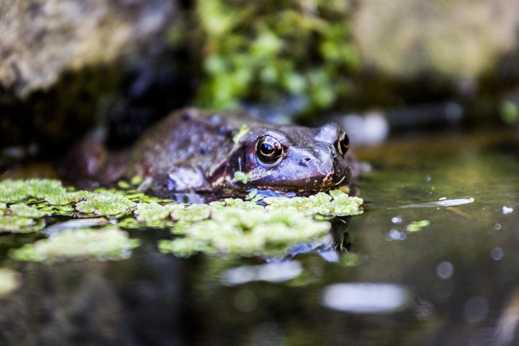 Frog by John Howard