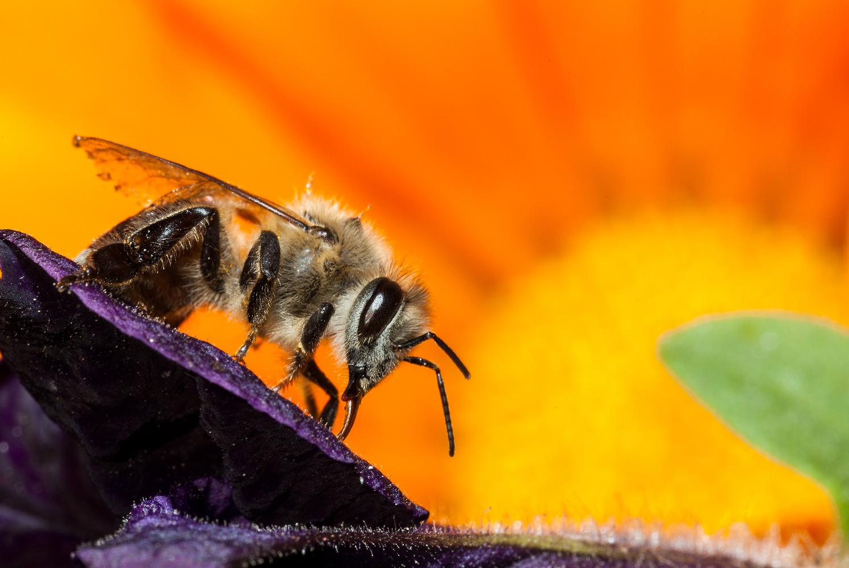 Bee In Paradise by Fahad alfahad
