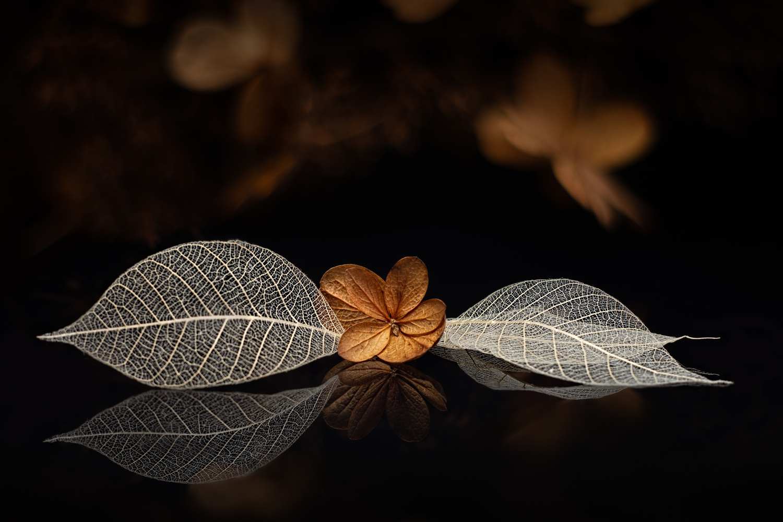 Hydrangea by Jim Elve