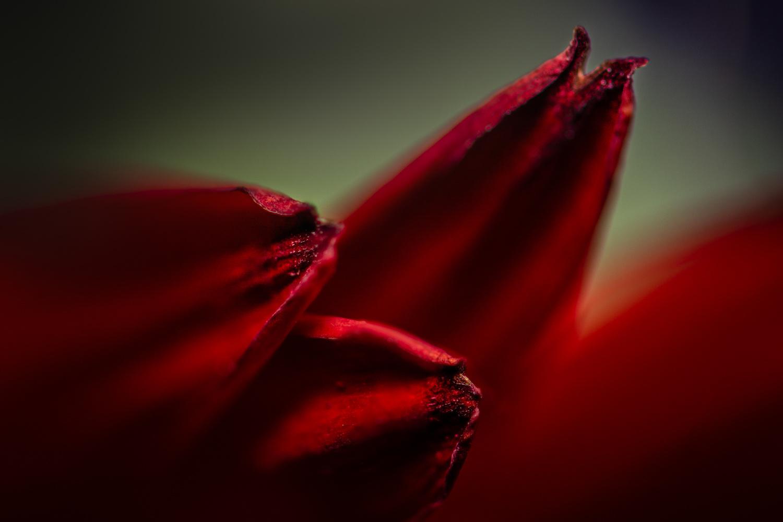 Petals by Jim Elve