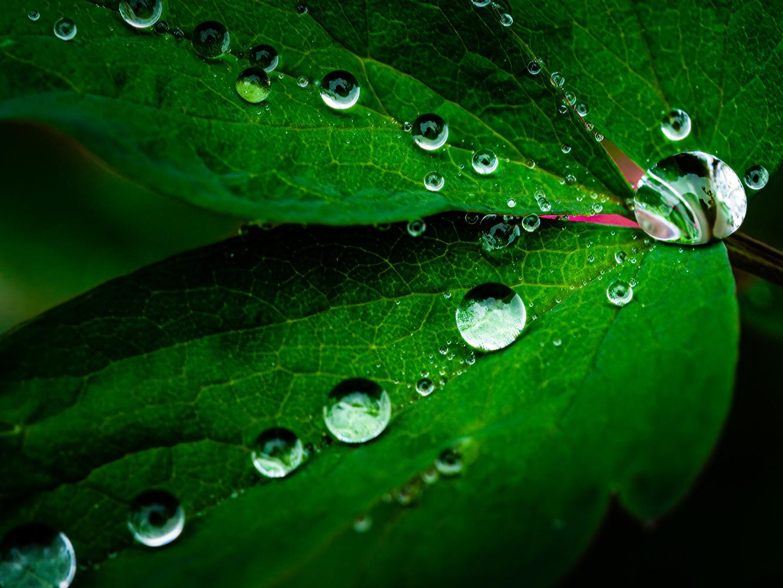 Raindrops by Jim Elve
