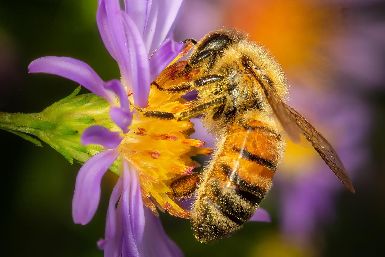 Honeybee by Jim Elve