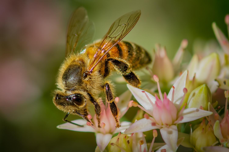 Honey Bee at Work by Jim Elve